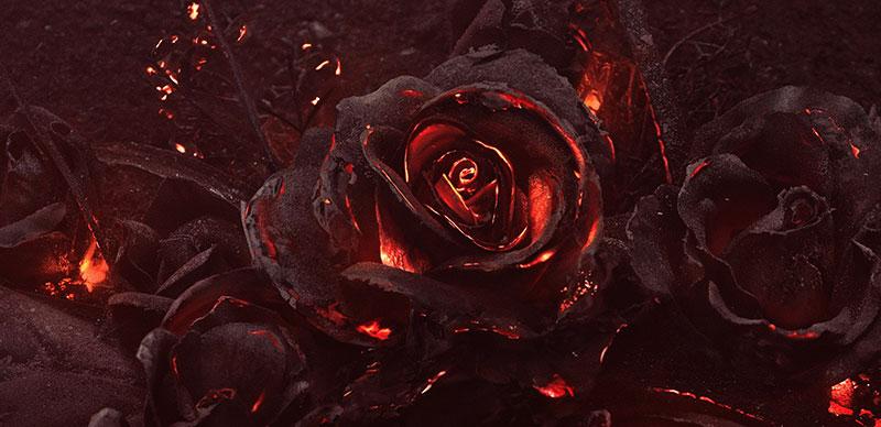 черные цветы